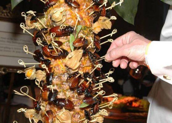 Gián, một loài côn trùng bị chê là bẩn thỉu, ấy thế mà lại là món ăn ngon ở nhiều nước và còn được nuôi để bán làm thực phẩm. Gián thường được chiên hoặc xào.